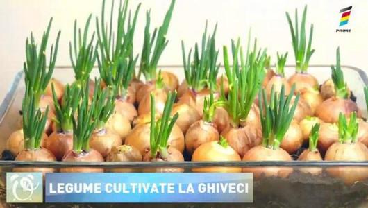 Trucuri utile! Cum poți crește legume proaspete cultivate la balcon