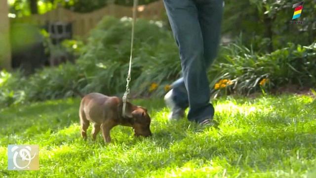 Italienii închiriază câini pentru a ieși din case fără să fie amendați