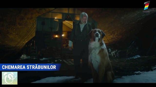 Lista filmelor cu și despre câini pe care trebuie să le vezi împreună cu toată familia