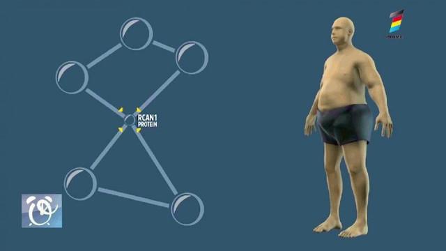 Potrivit cercetătorilor, obezitatea poate fi tratată printr-o terapie genetică