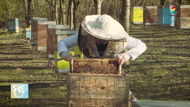 Totul despre produsele apicole. Recomandări și sfaturi de la apicultori