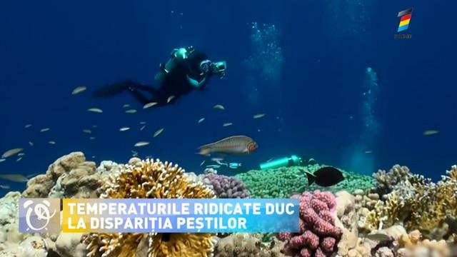 O creștere extremă a temperaturilor ar putea duce la dispariția speciilor de pește