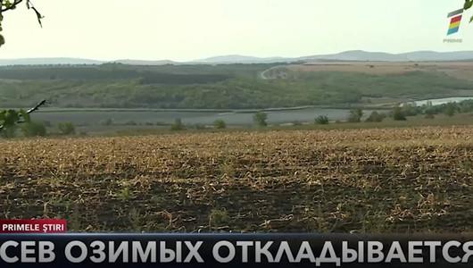 Молдавские фермеры отложили сев озимой пшеницы почти на месяц