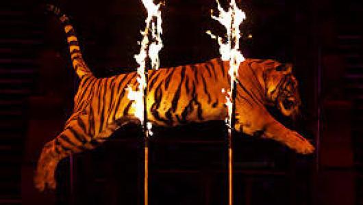 Хроники пандемии: животным Кишиневского цирка нечего есть