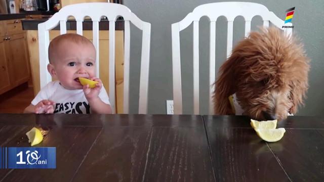 Ce reacție au copiii când simt gustul lămâiei