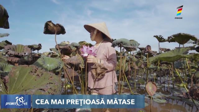 Mătasea de lotus, cea mai prețioasă. O eșarfă costă în jur de 200 de dolari