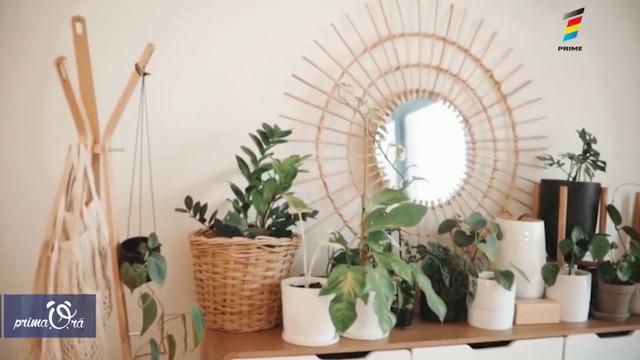 Aerul proaspăt în casă nu depinde doar de geamurile deschise. Află cum poți să împrospătezi atmosfera